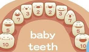 【育兒常識】寶寶乳牙與恆牙的區別